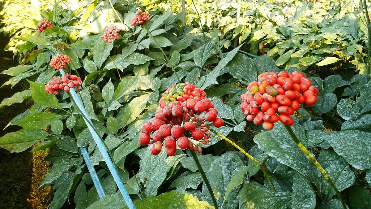 《夏》真っ赤な果実2